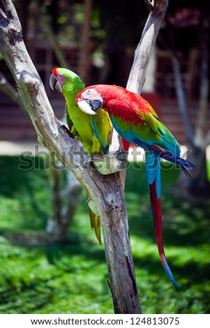 macaw  parrot sitting on branch