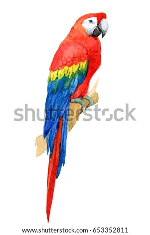 Macaw parrot, tropical birds isolated on white background, watercolor illustration