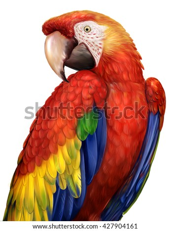 Macaw Parrots drawings - stock photo