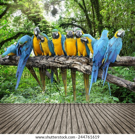 Macaw with wooden texture  - stock photo