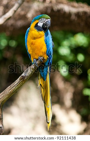 macaws in the trees at the zoo - stock photo
