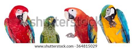 Macaws set isolated on white background - stock photo