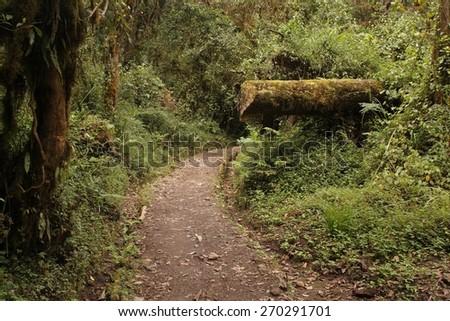 Machame route to Kilimanjaro summit. Stage 1 from Machame Gate to Machame Hut. - stock photo