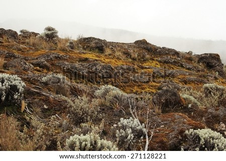 Machame route to Kilimanjaro summit. Stage 2 from Machame Hut to Shira Hut. Fog on a background. - stock photo