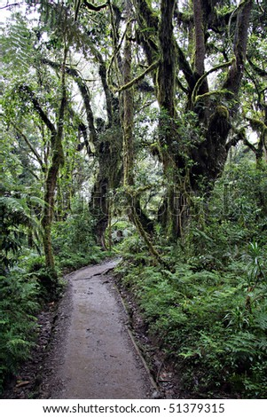 machame trail near the machame gate in the kilimanjao national park - stock photo