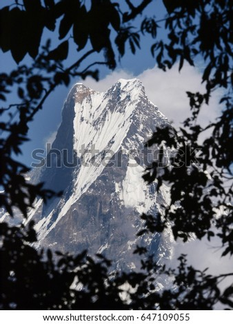 Machapuchare mountain (6993m) - the fishtail mountain - framed with branches of a forest along the Annapurna Trail in Himalayan Nepal
