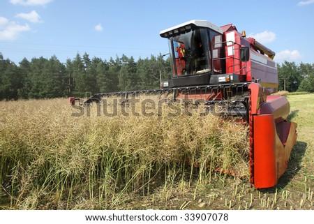 Machine harvesting Rapeseed - stock photo
