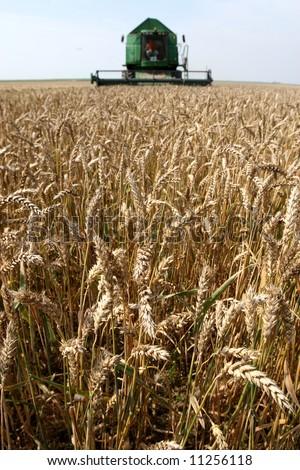 Machine harvesting the corn field - stock photo