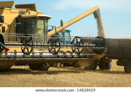 Machine harvesting the corn field