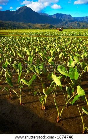 Machine in Taro fields on Kauai Hawaii. More with keyword Series001B