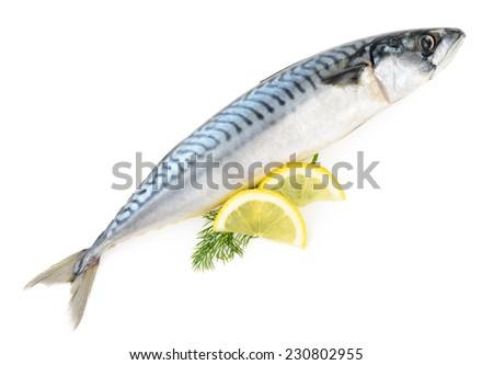 mackerel fish isolated - stock photo