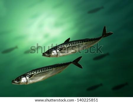 mackerel fish on a sea background - stock photo