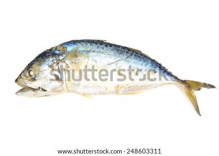 mackerel fish on white background - stock photo