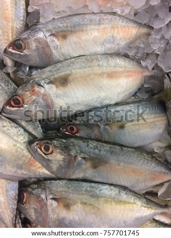 Mackerel in ice bucket for sell