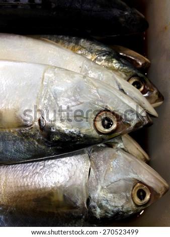 Mackerel in the market - stock photo