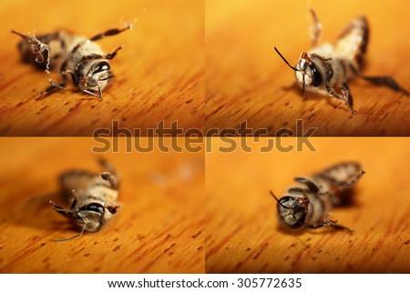 macro bee on wood - stock photo