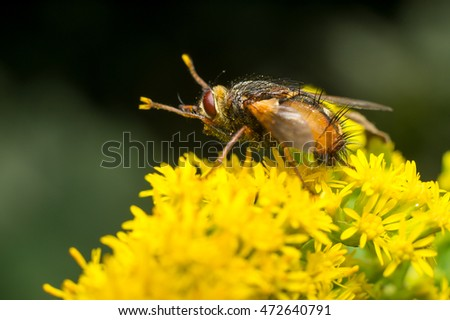 macro bee resting on flower, pollen