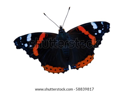 Macro bright black and red butterfly isolated on the white background