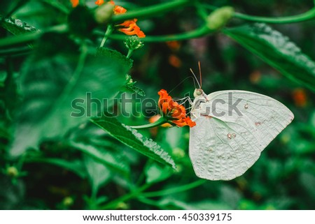 macro butterfly on flower in reopical garden of thailand. Image is vintage effect and low light photo - stock photo
