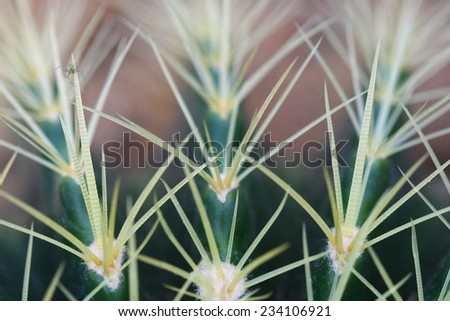 macro cactus - stock photo