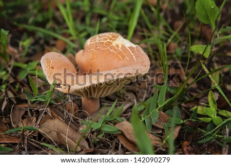 macro close up of a mushroom in the grass
