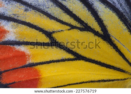 Macro close up of an Monarch Butterfly Wing  - stock photo