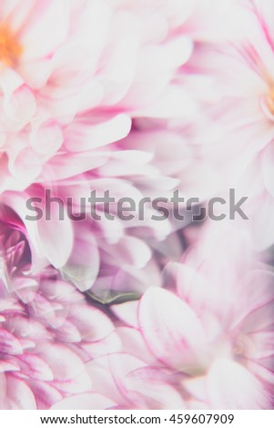 Macro Close up of Pink Dahlia Flower Through Prism Glass For Abstract Effect