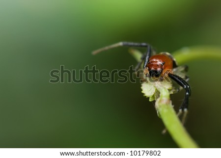 Macro/close-up shot of a reddish spider on a green vine
