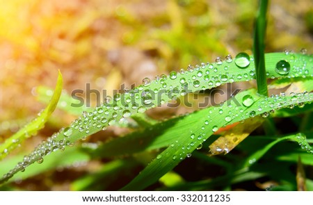 Macro closeup detail of water drop on leaf or plant. Clear rain. - stock photo
