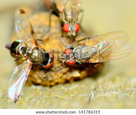 Macro closeup of a flies perched on a dung ball. - stock photo