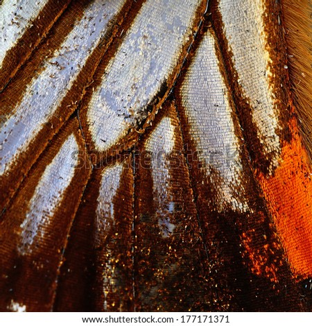 Macro closeup of butterfly wing background - stock photo