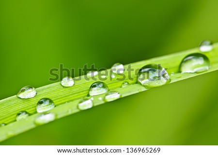 Macro closeup of water drops on green grass blade - stock photo