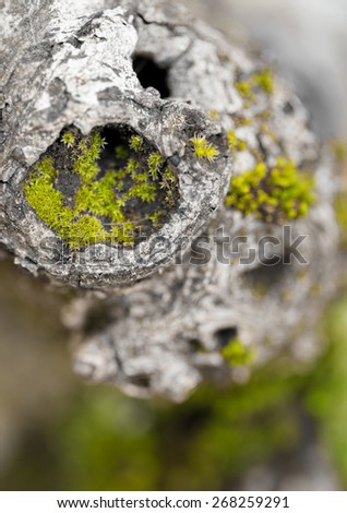Macro Detail from an Old Tree - stock photo