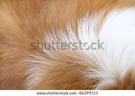 Macro Dog Hair - stock photo