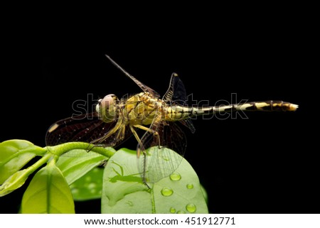 Macro Dragonfly on the green leaf. - stock photo