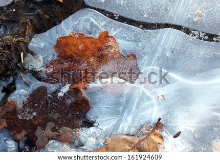 macro dry yellow fallen oak leaves covered with frost and drops illuminated by sunlight - stock photo