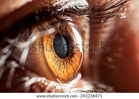 macro eye - stock photo