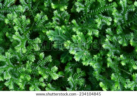 macro fern and moss - stock photo