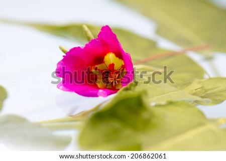 macro flower on water - stock photo