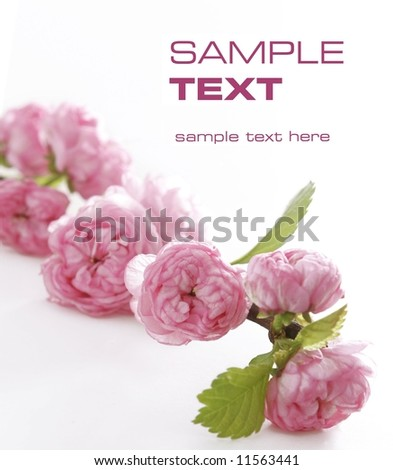 macro flowers - stock photo