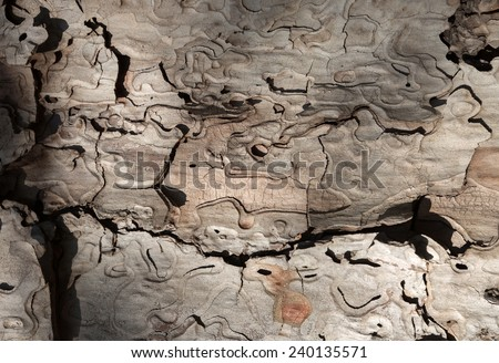 Macro fragment of a pine bark pattern  - stock photo