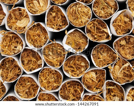 Macro front view of tobacco inside of cigarettes. - stock photo