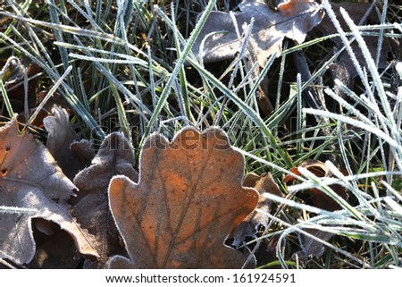 Macro green grass and leaves of plants from frost - stock photo