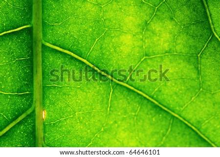 macro green leaf - stock photo