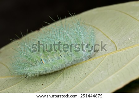 Macro image of a spiny caterpillar on green leaf - stock photo