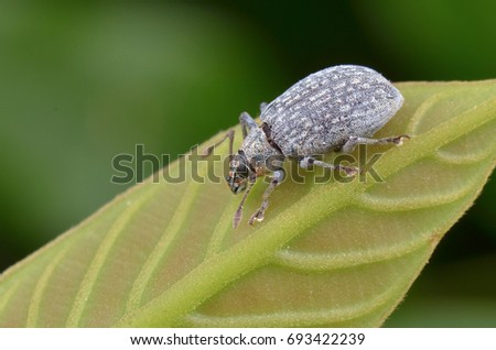 macro image of a tiny weevil