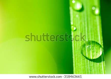 Macro image of fresh rain water droplets on a crisp clean green leaf - stock photo
