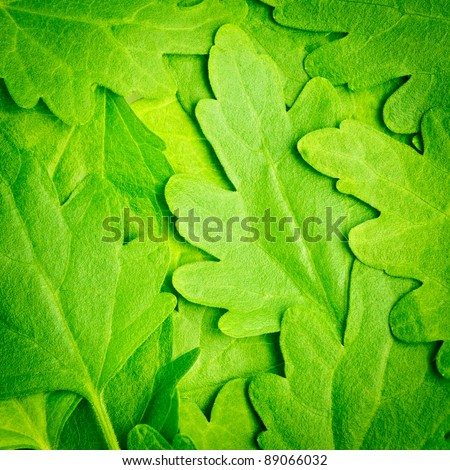 Macro image of green camomile leaves - stock photo