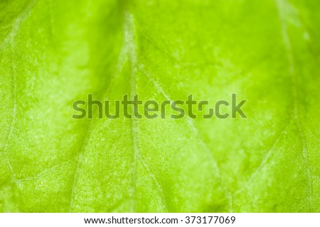 Macro image of green leaf, small depth of field. Green leaves background