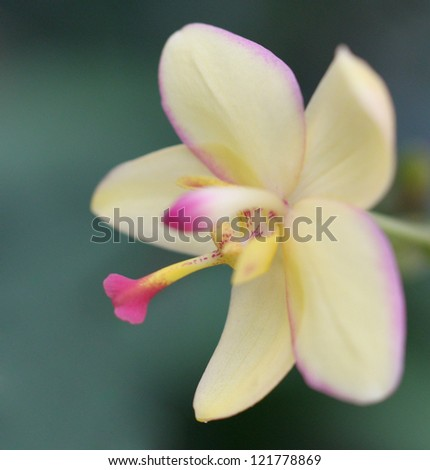 Macro image of orchid - stock photo